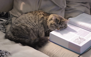 Halley_studying_for_step_1_of_the_boards